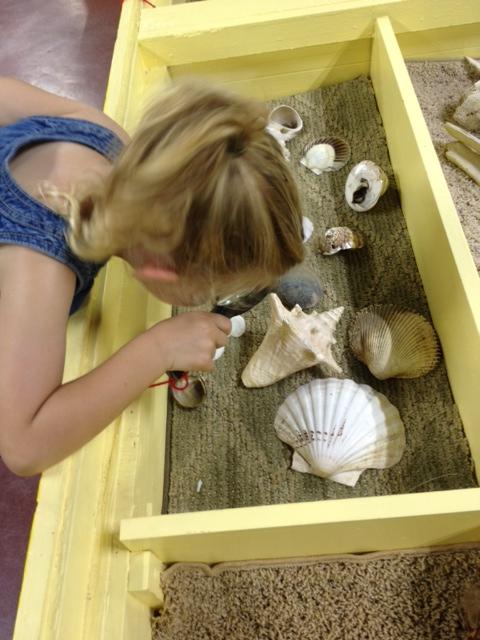 Lib Shells